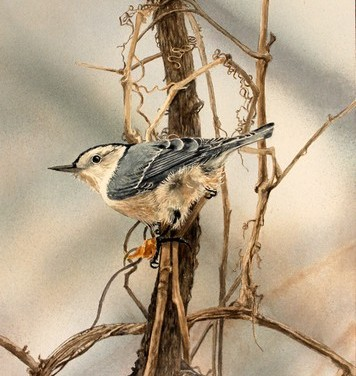Nuthatch in the Wind by Marilynn Thomas
