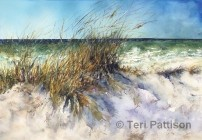 Beach Grass by Teri Pattison