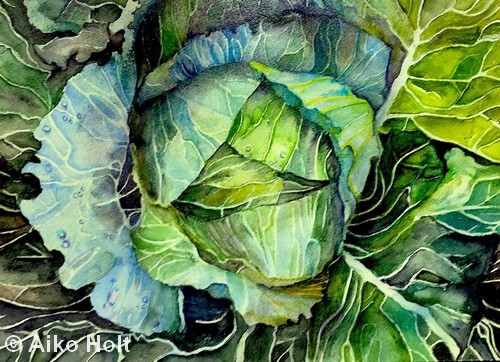 Cabbage | Watercolor | 12x16"