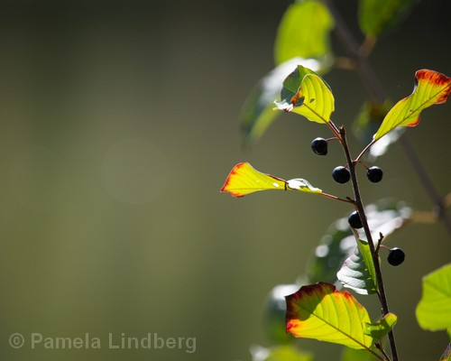 Berries | Photography | 11x14"