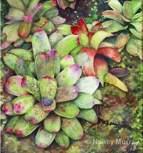 Bromeliads | Watercolor | 15x14"
