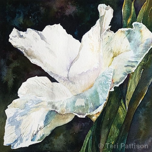Iris in the Sun | Watercolor | 10x10"
